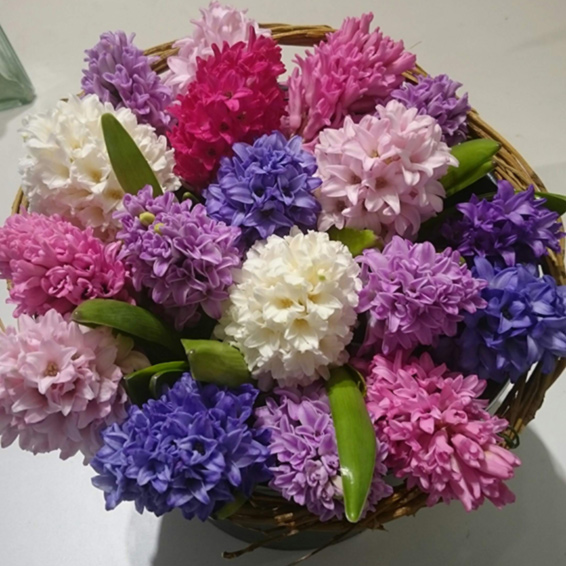 German handtied Pink, white and purple hyancinths spring bouquet